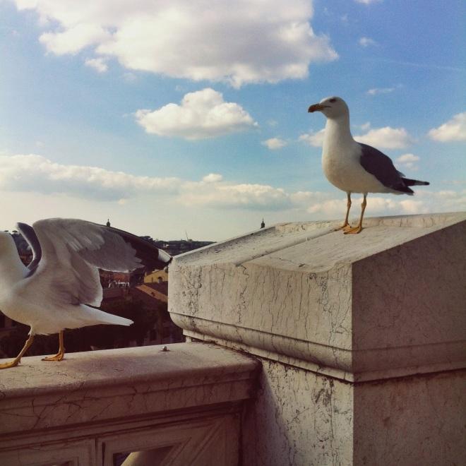 Чайки тут повсюду